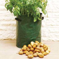 Grow Your Own Potatoes Ready For Christmas!