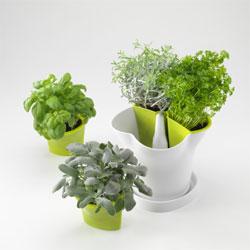 herb_pot2