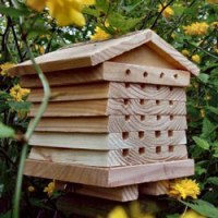 solitary_bee_hive2
