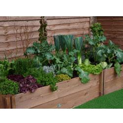 edible_garden2